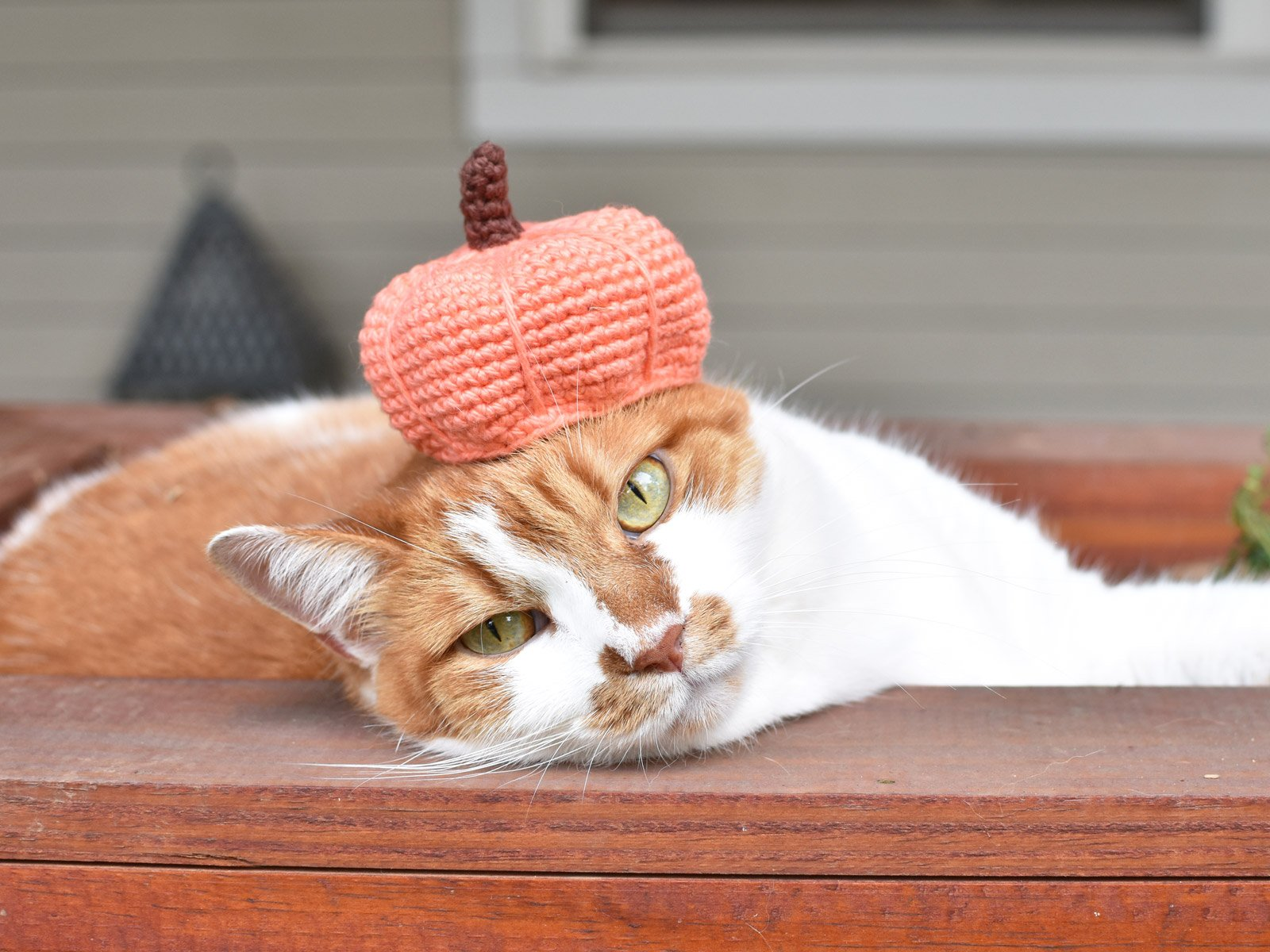Pumpkin beret on a cat