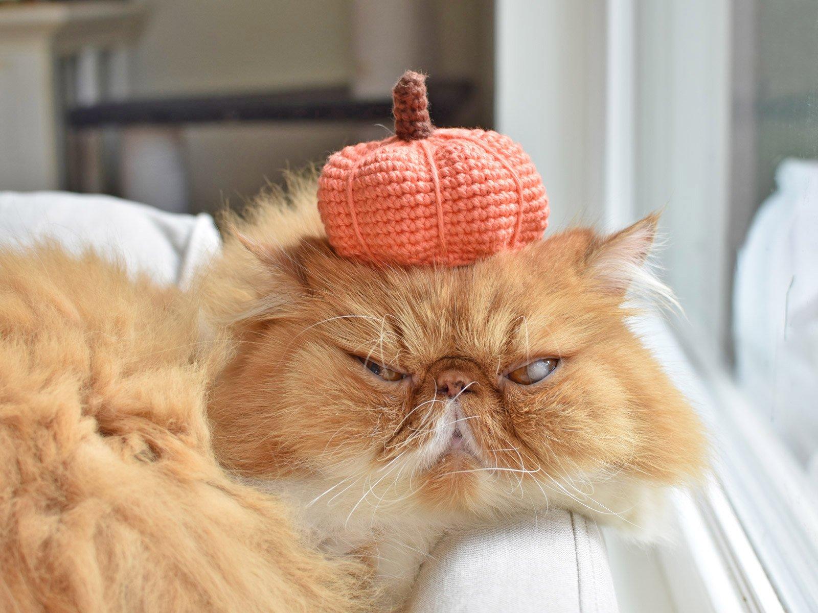 Cat wearing a crochet pumpkin hat.