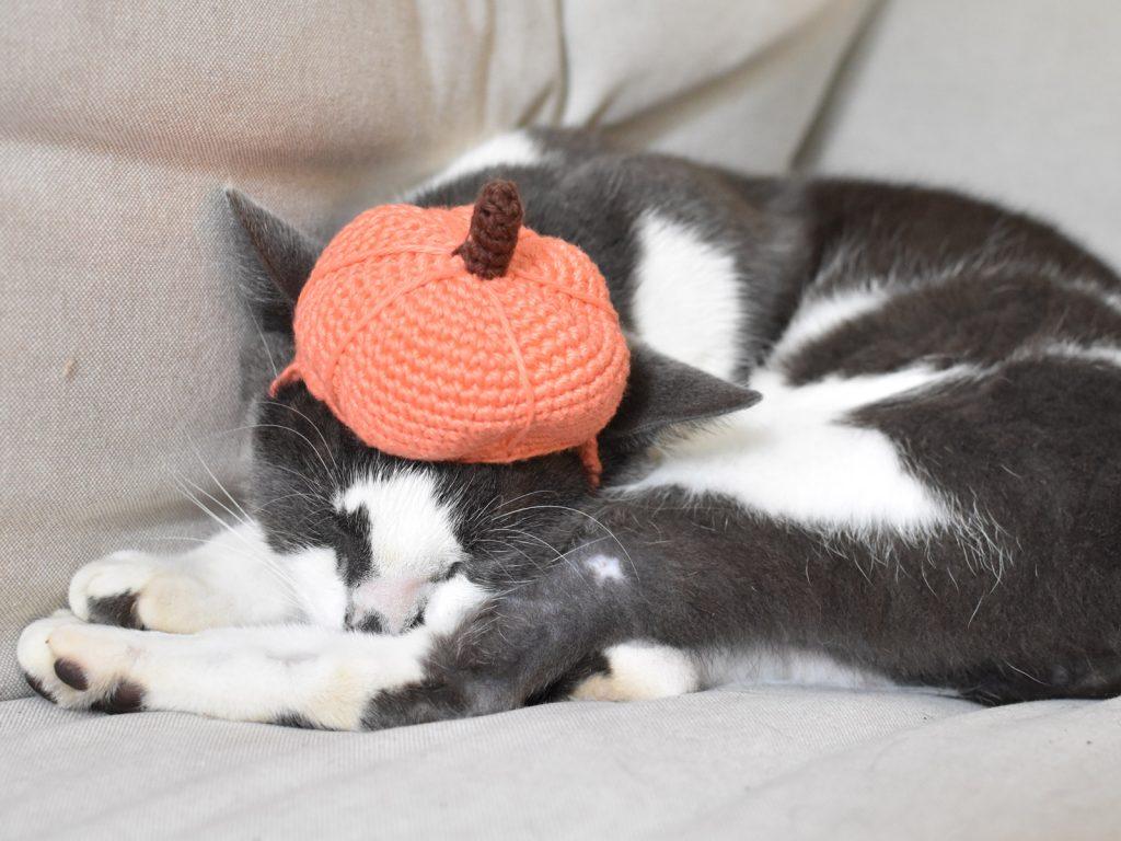 cat with pumpkin beanie on head