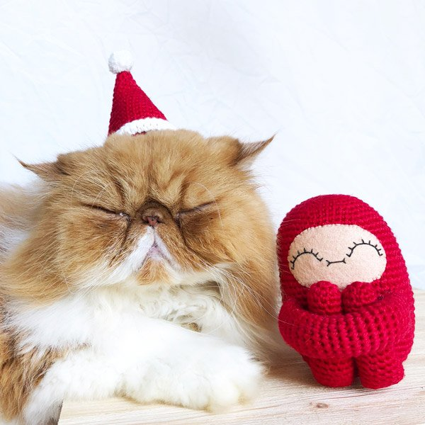 cat with santa hat on